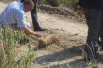 Старый снаряд нашли рядом с роддомом в Тирасполе